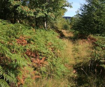 Tracks on Bennachie
