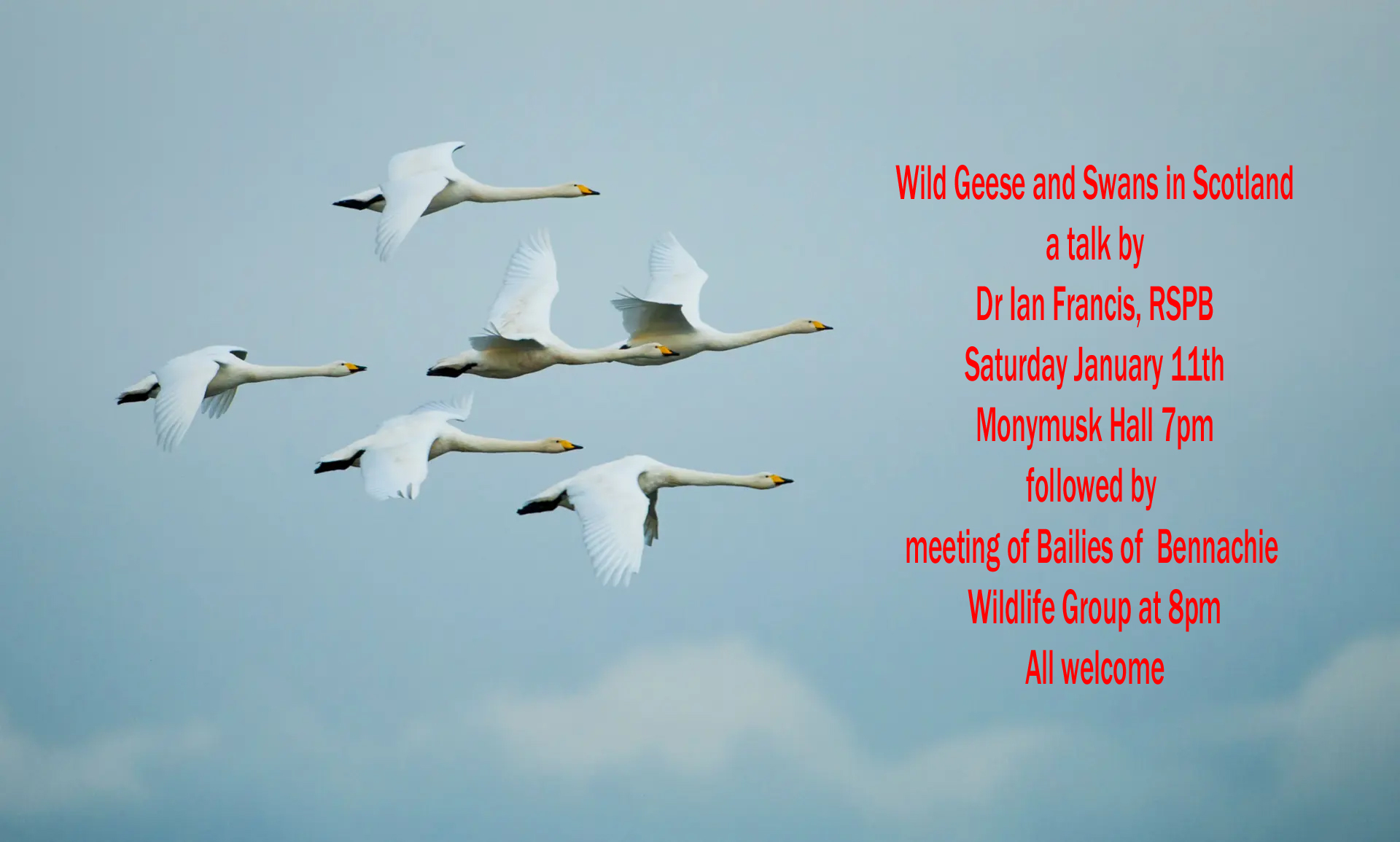 Wildlife Group: Talk on Wild Geese and Swans